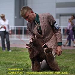 Немецкая овчарка  фото описание породы дрессура