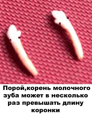 http://www.atami.ru/image/vet/vet-9_clip_image001_0000.jpg