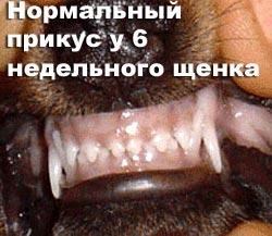 http://www.atami.ru/image/vet/vet-9_clip_image002.jpg