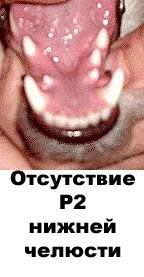 http://www.atami.ru/image/vet/vet-9_clip_image003.jpg