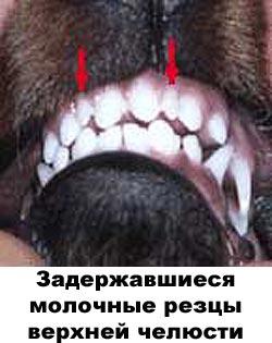 http://www.atami.ru/image/vet/vet-9_clip_image004.jpg